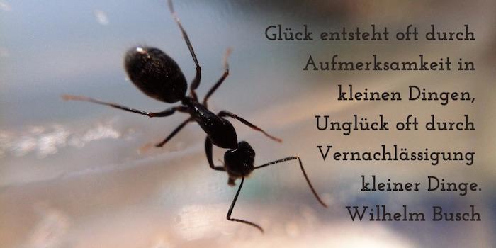 zitate_achtsamkeit_glueck-in-kleinen-dingen_wilhelm-busch